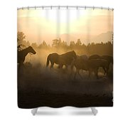 Cowboy Chasing Horses Shower Curtain