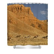 Cowboys Chasing Horses Shower Curtain