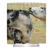 Cowlick Shower Curtain