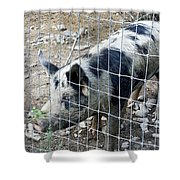 Cowpig On The Farm Shower Curtain