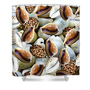 Cowrie Shower Curtain