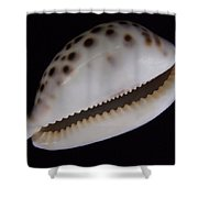 Cowry Shell Shower Curtain