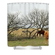 Cows 015 Shower Curtain