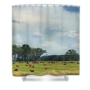 Cows 02 Shower Curtain