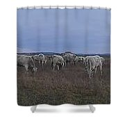 Cows And Cows Shower Curtain
