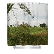 Cows And Farm In Michigan  Shower Curtain