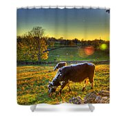 Cows And Stone Fences Shower Curtain