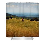 Cows At Doughton Park 2 Shower Curtain