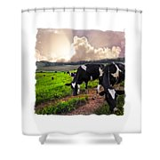 Cows At Sunset Bordered Shower Curtain