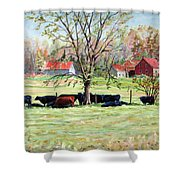 Cows Grazing In One Field  Shower Curtain