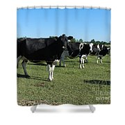 Cows In A Row Shower Curtain