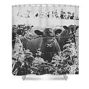 Cows In Black And White Shower Curtain