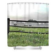 Cows In Field Shower Curtain