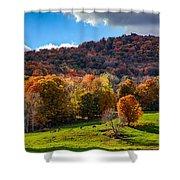 Cows In Pomfret Vermont Fall Foliage Shower Curtain