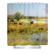 Cows In The Desert Shower Curtain