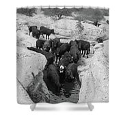 Cows In The Hole Shower Curtain