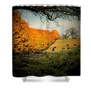 Cows In The Meadow Shower Curtain