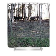 Cows In The Woods Shower Curtain