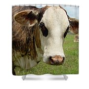 Cows8937 Shower Curtain
