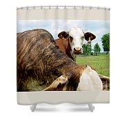 Cows8938 Shower Curtain