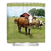 Cows8944 Shower Curtain
