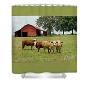 Cows8954 Shower Curtain