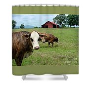 Cows8986 Shower Curtain