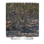 Coyote 2 Shower Curtain