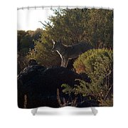 Coyote At The Petrogyphs 2 Shower Curtain
