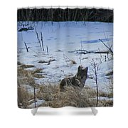 Coyote Food Hunting Shower Curtain