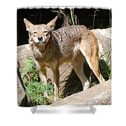 Coyote Grin Shower Curtain