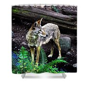 Coyote In Mid Stream Shower Curtain