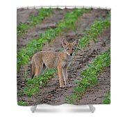 Coyote Pup Shower Curtain