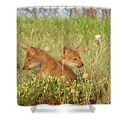 Coyote Pups Shower Curtain