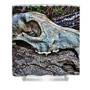 Coyote Skull Shower Curtain