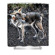 Coyote Waits Shower Curtain