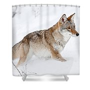 Coyote Winter Shower Curtain