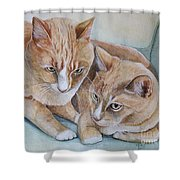 Cozy Cats Shower Curtain