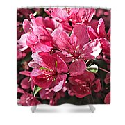 Crab Apple Blossoms 04302015-1 Shower Curtain