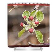 Crab Apple Buds Shower Curtain