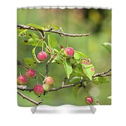 Crab Apple Fruit Shower Curtain