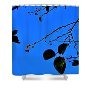 Crab Apples Blue Sky 6510 Shower Curtain