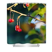 Crab Apples Branches P 6543 Shower Curtain