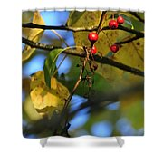 Crab Apples Leaves 6498 Shower Curtain