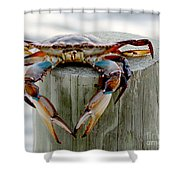 Crab Hanging Out Shower Curtain