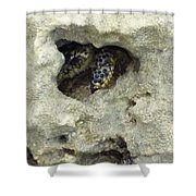Crab Hiding In A Rock On The Seashore Shower Curtain