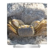 Crab On The Beach Shower Curtain