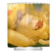 Crab Spider Head Shower Curtain