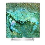 Crab With The Blues Shower Curtain
