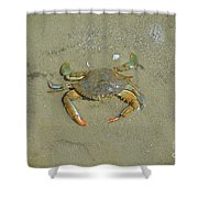 Crabby Shower Curtain